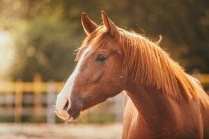 Hipofobia ou medo de cavalos