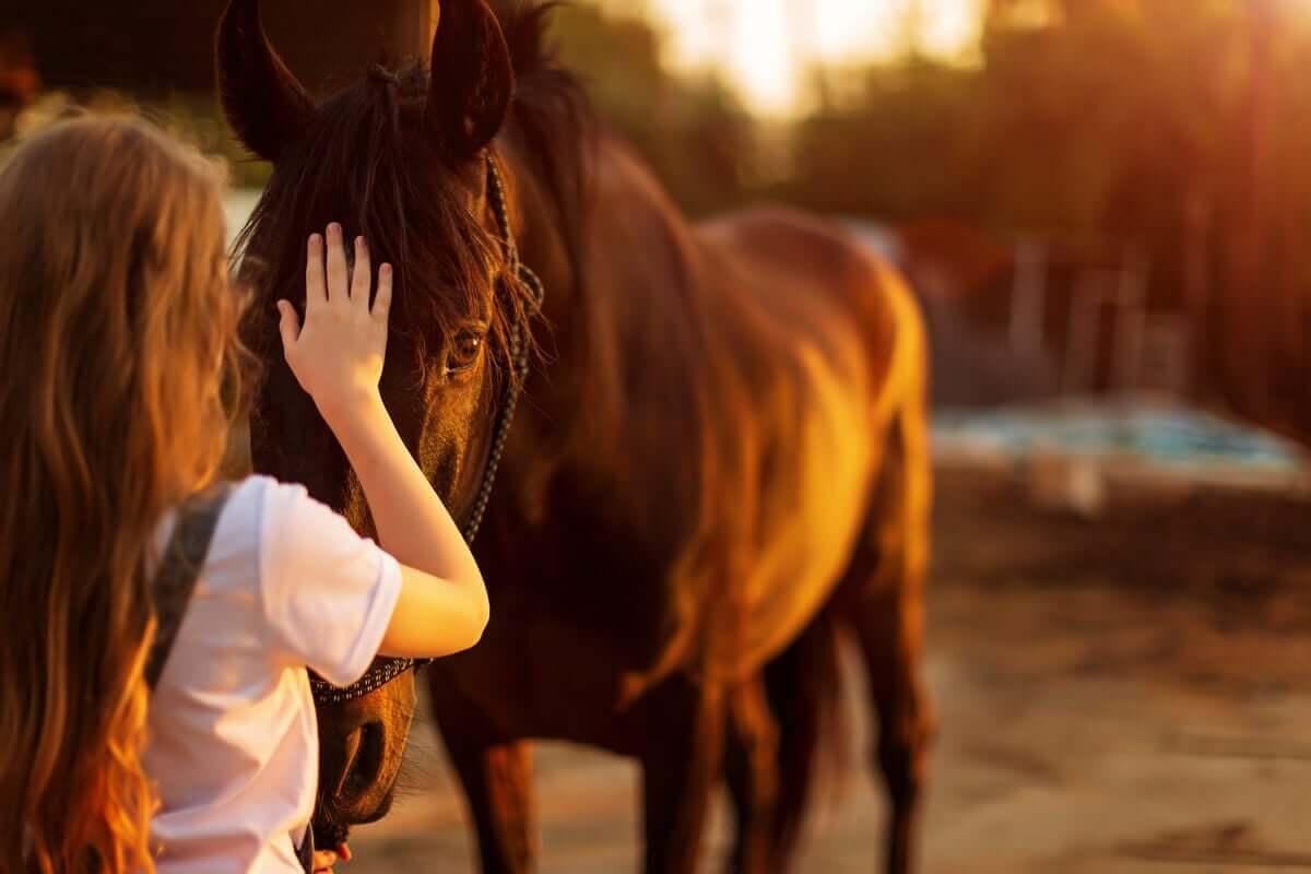 Mulher fazendo carinho em cavalo