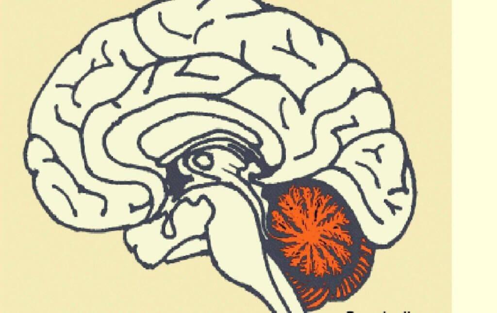 Representação do cerebelo