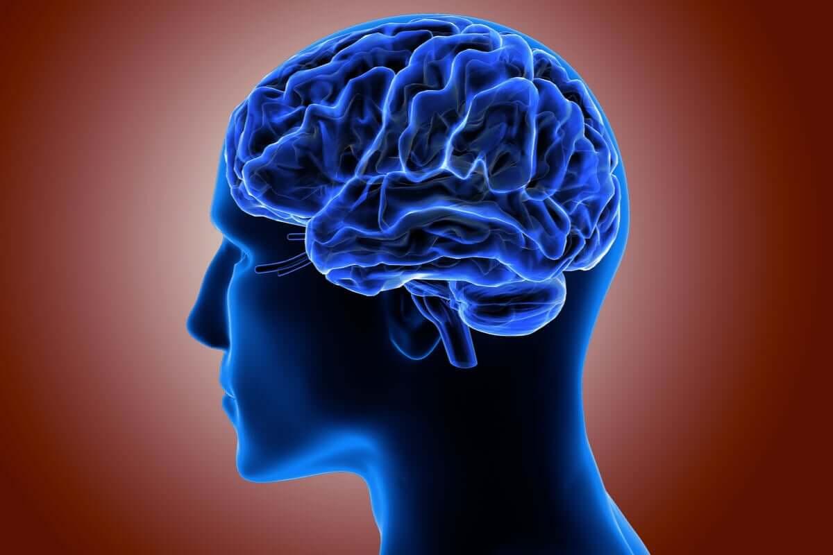 O que é o córtex cerebral e qual é a sua aparência?