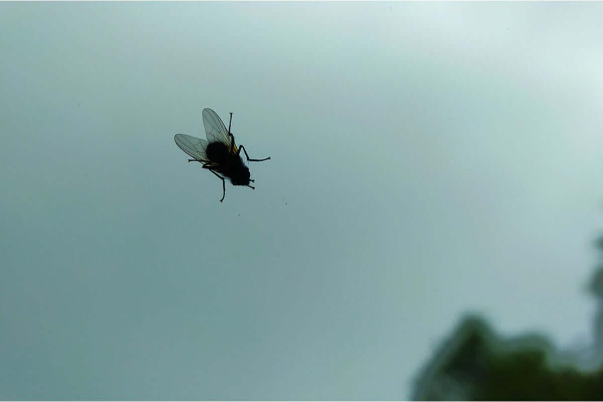 O medo de insetos