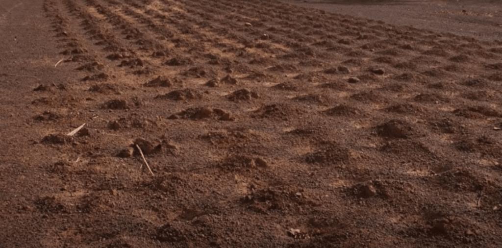 Terreno fértil