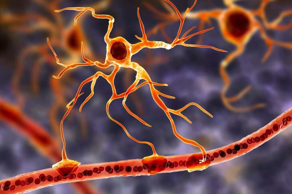 Células gliais: a base funcional do cérebro
