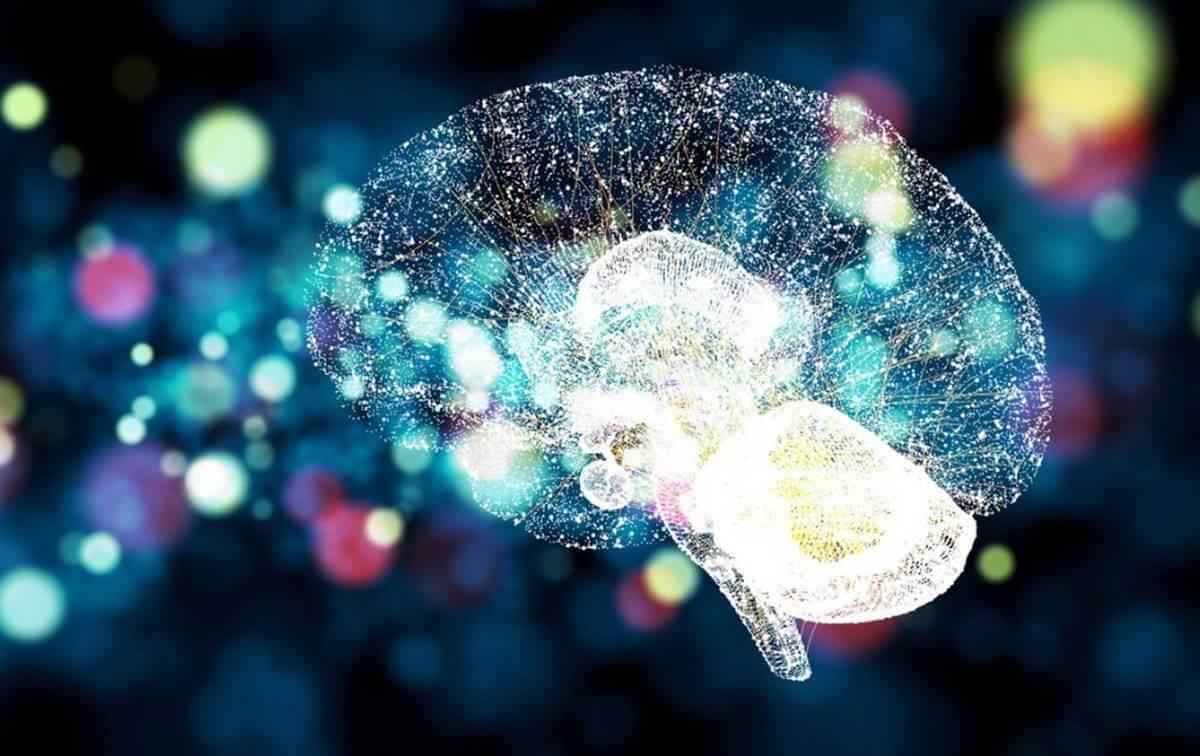 O estresse no cérebro