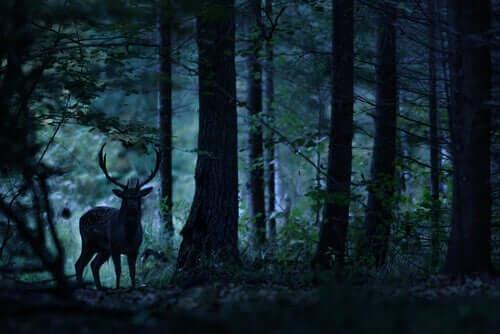 Cervo em floresta