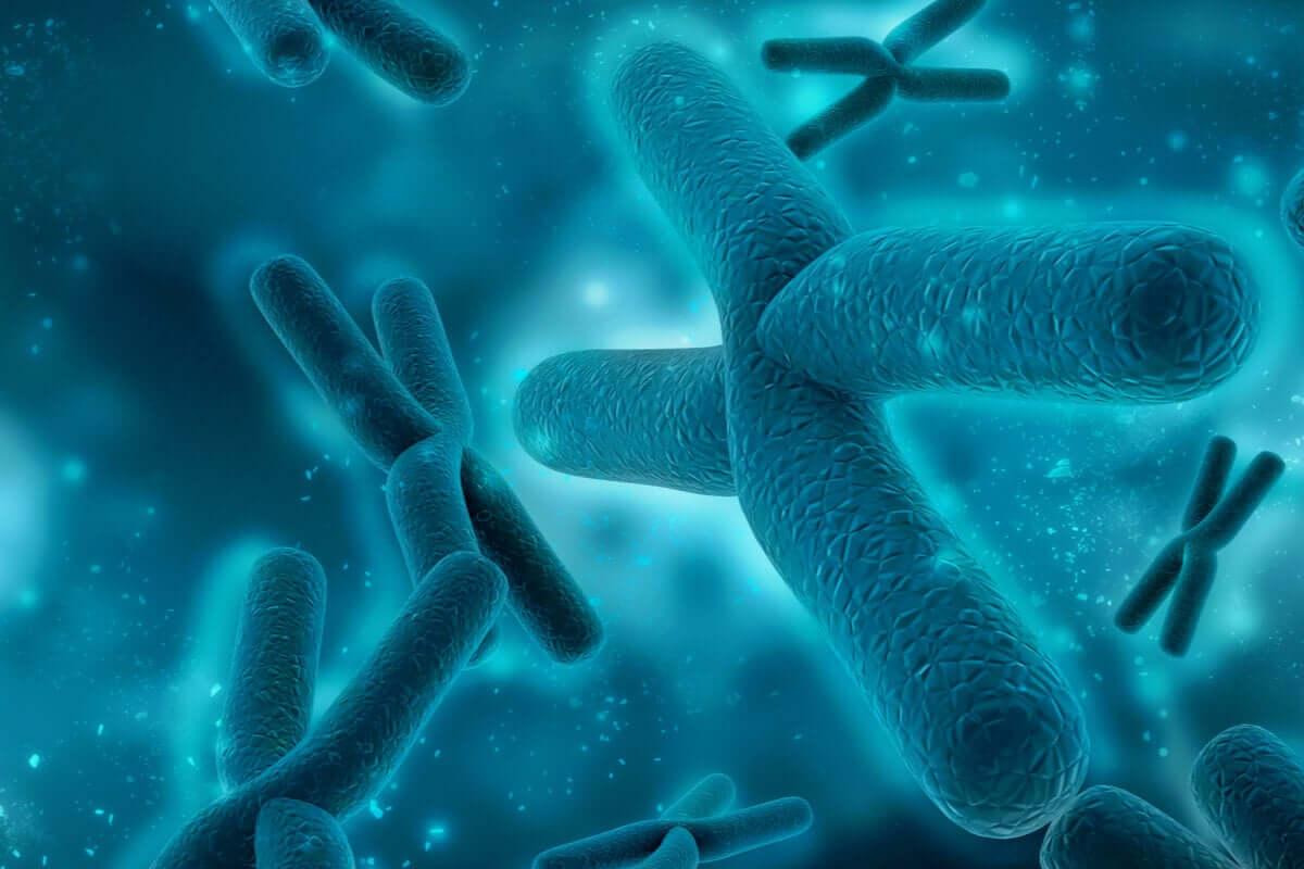 Pares de cromossomos