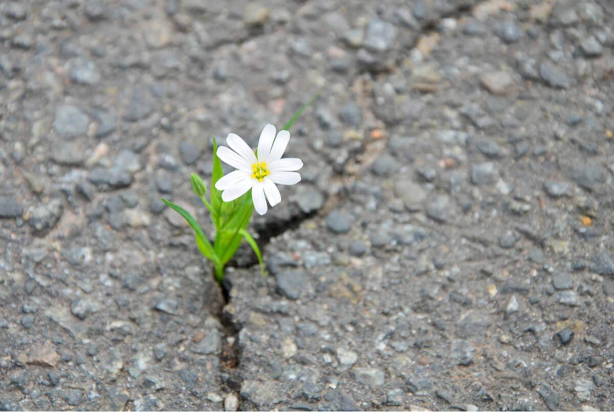 Flor nascendo no asfalto