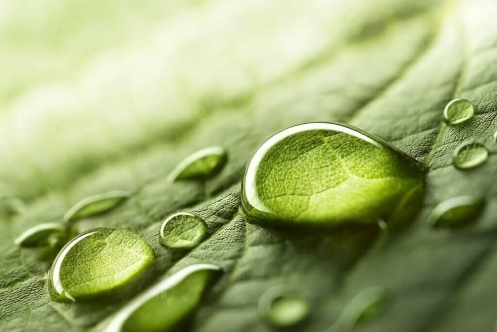 Gota de água em folha