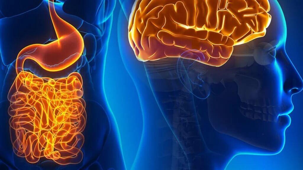 Neurônios do intestino: funções e como se relacionam com o cérebro