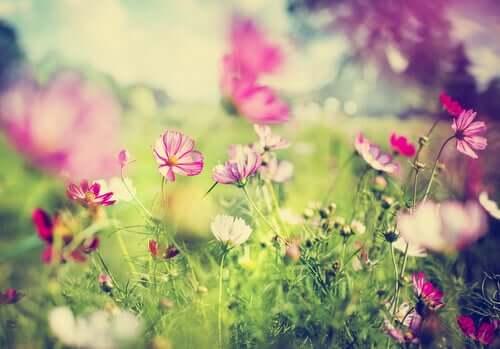 Um lindo jardim e um evento estranho