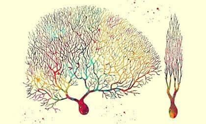 Neurônios de Purkinje, as células enigmáticas do cerebelo e do coração