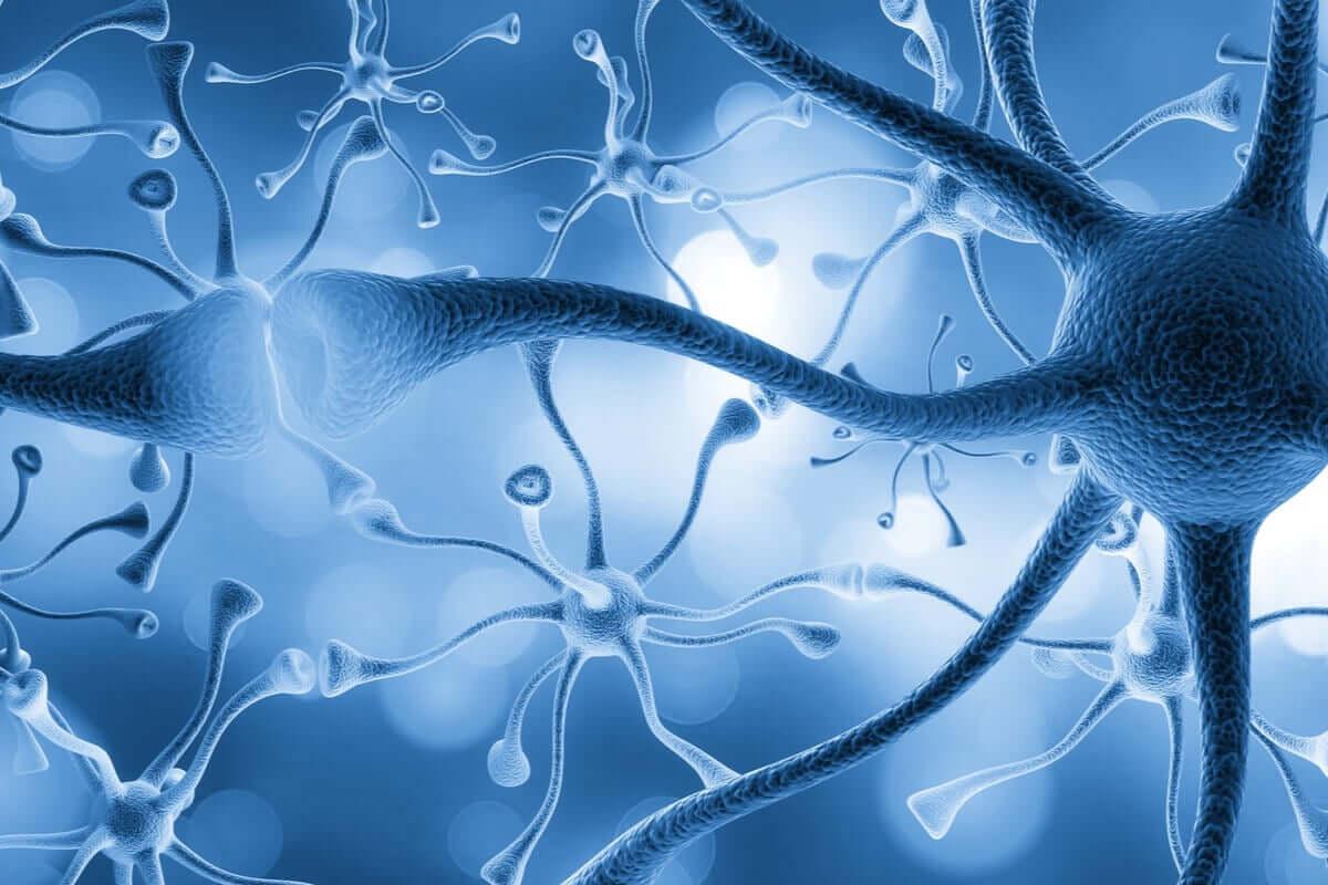 Hábitos que matam neurônios