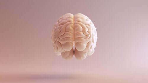Corte frontal do cérebro