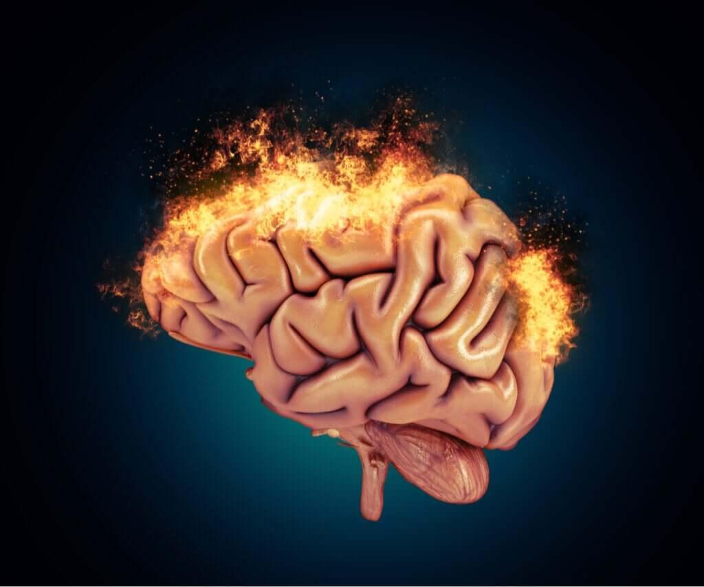 Bases neurobiológicas da agressividade