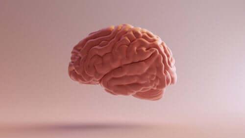 Diencéfalo: estrutura, funções e curiosidades