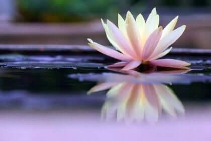 Flor na lagoa