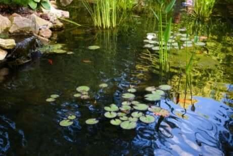 Lagoa com plantas