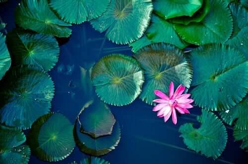 A lagoa, uma antiga lenda Zen