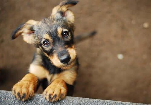 Animais de estimação resgatados: como escolher o seu melhor amigo?