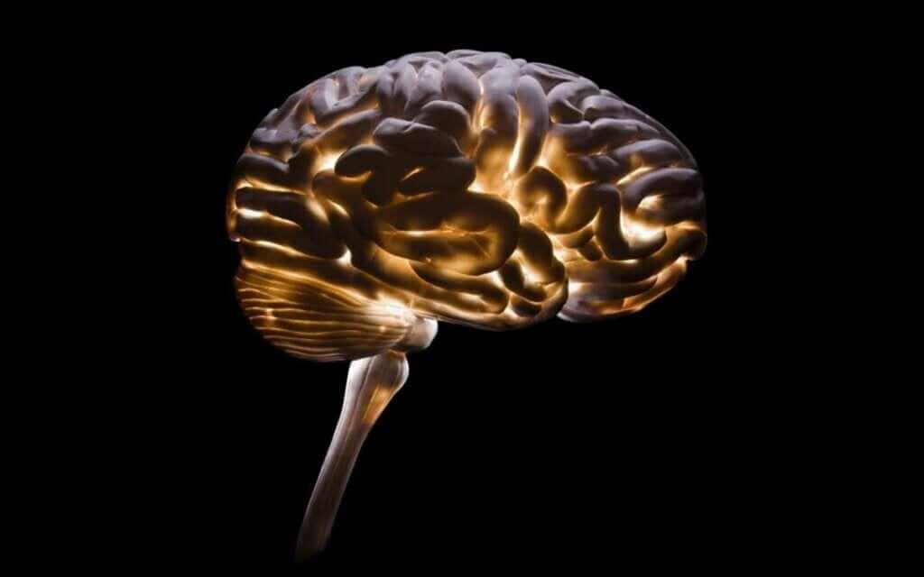 Neurocriminologia: uma disciplina cada vez mais necessária