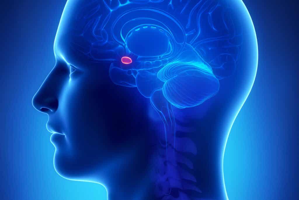 A origem neurológica da ataraxia