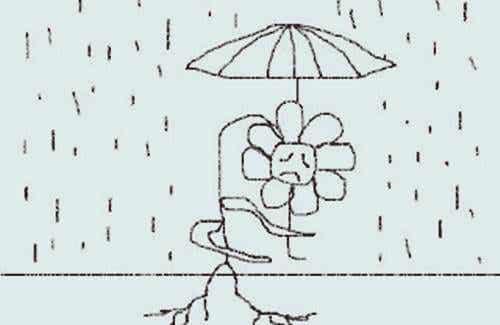 Flor se protegendo da chuva