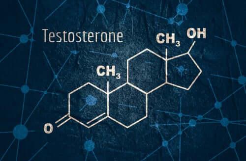 Testosterona: características e funções