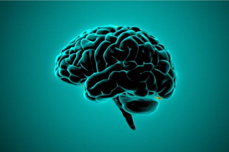 O que a neurociência diz sobre o cérebro das pessoas violentas?