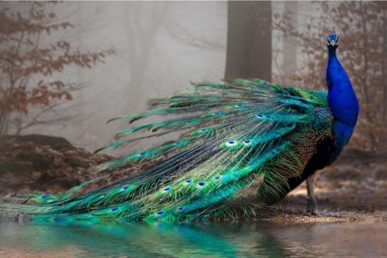 Os 11 animais mais bonitos do mundo