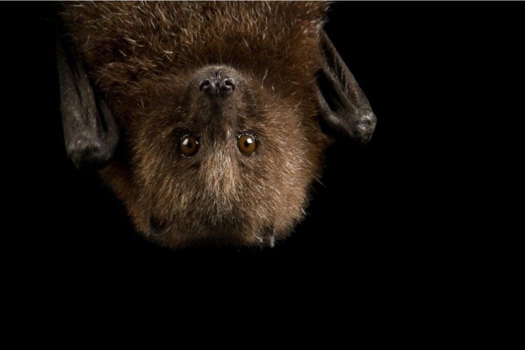 9 curiosidades sobre os morcegos