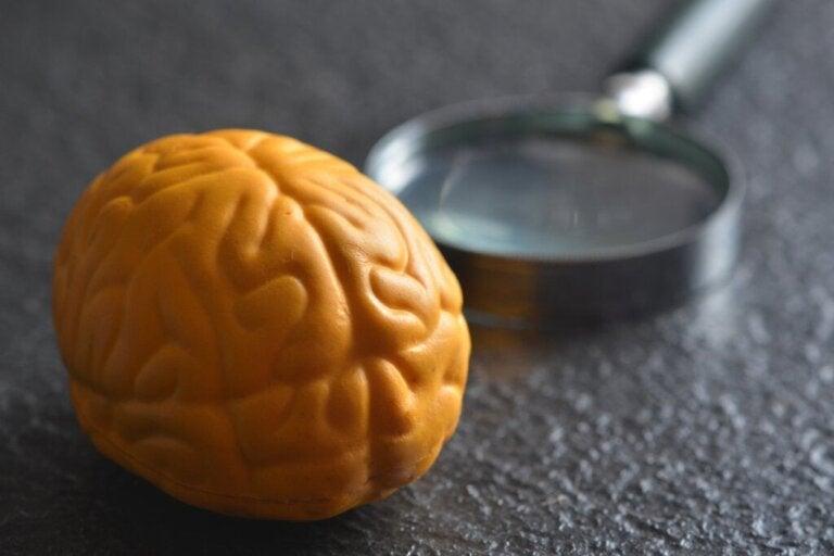 Por que o cérebro tem dois hemisférios?