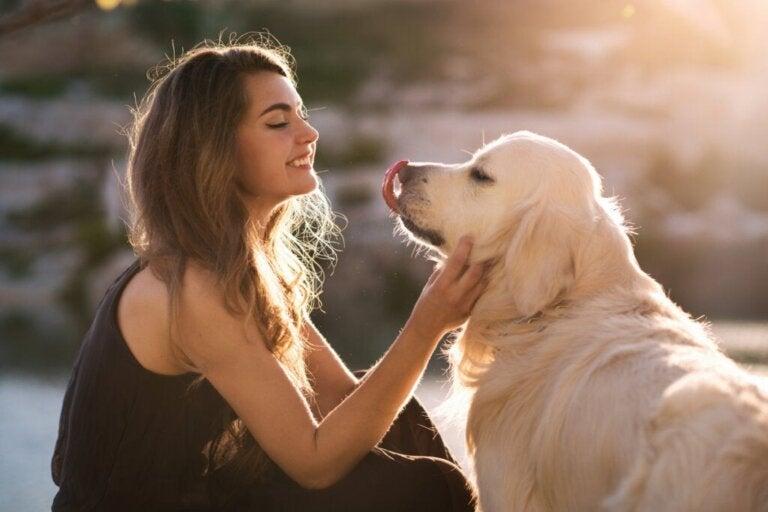 Seu cachorro entende quando você fala com ele, de acordo com um estudo