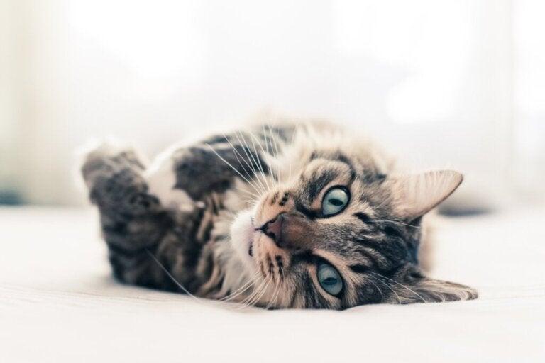 10 curiosidades sobre os gatos